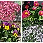 Fruehling Blumen 150x150 Toller Sonntag – ein echter Sonntag # 44
