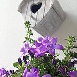 garten im sommer 150x150 April   Blumendeko Ideen für den Garten