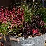 herbstliche bepflanzung 150x150 Toller Sonntag – ein echter Sonntag # 56